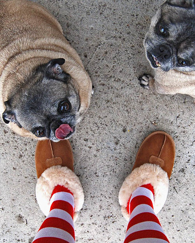 Uggs and Puggs