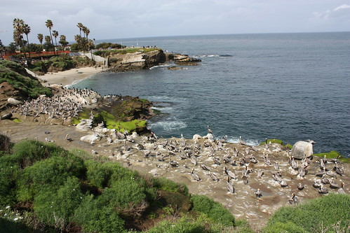 Fortunately, this photo does not convey the smell of thousands of seabirds, pooping.