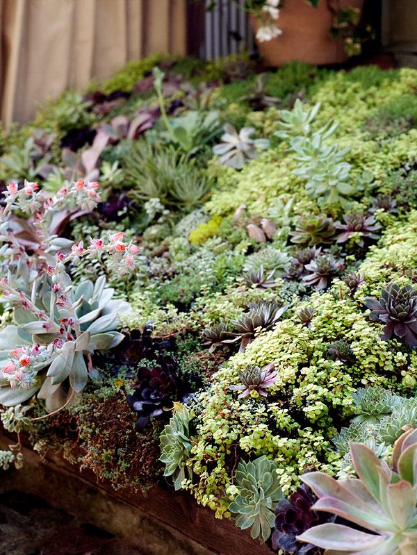 Lenkin Gardens Roof Garden
