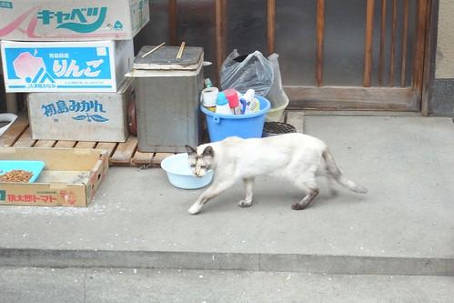 Today's Cat@2010-03-08