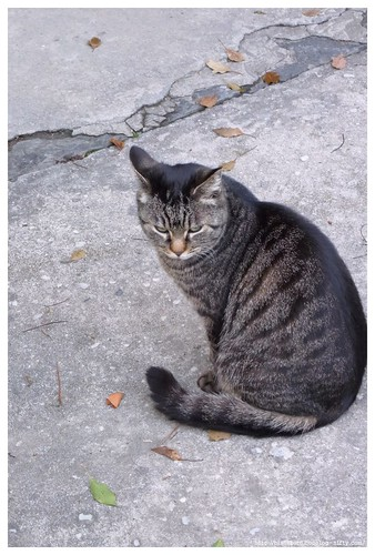 Cat 100310 #01
