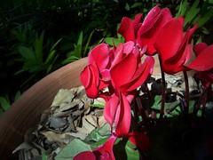 Garden Blooms March 15, 2010 - 9