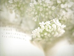 Queen Anne's Lace (luvpublishing) Tags: flowers white green texture nature floral book words pages text overlay picnik queenanneslace layered explored softdreamyandethereal