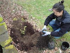Joyce Plants Dogwoods (2)