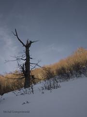 Picinisco 32 (20.03.2010). (mik7720) Tags: italy snow italia olympus neve passion miki legno bosco drzewo wlochy snieg e400 montagnia mik77 mik7720