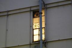 歌舞伎座 裏窓014