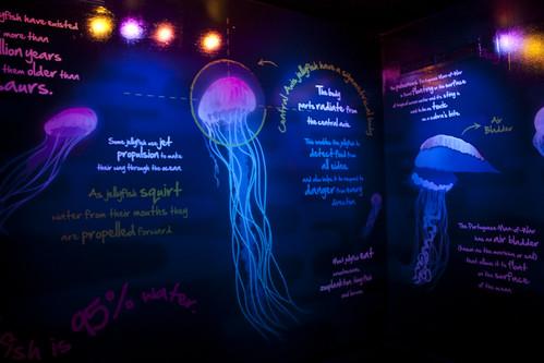 Black-light Jellyfish Room