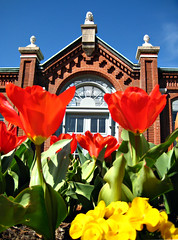 Tulips in front of the Linnean House