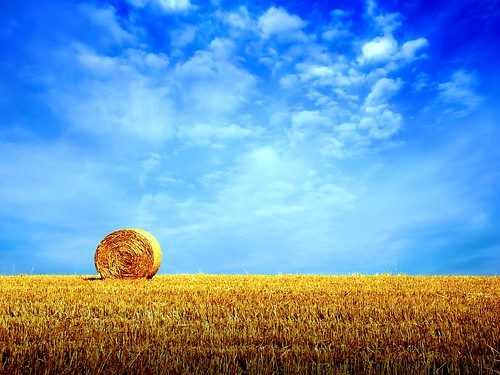 summer-hay-field-wallpapers_8751_1600x1200