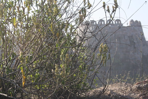 City Landmark - Tughlakabad Fort, Near Badarpur