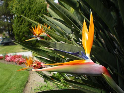bird of paradise 2.jpg