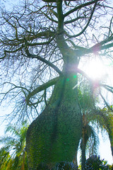 crazy thorny tree in the sun