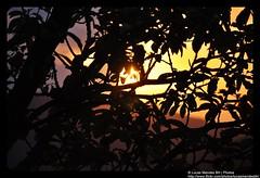 Por do Sol -  (144) (Lucas Mendes BH) Tags: world life camera sunset wallpaper sun color love sol beautiful del cores effects grande photo google amazing cool nikon flickr do image photos xx amor awesome large sigma x lucas vermelho size amarelo nuvens xxx fotografia bela puesta mendes retiro efeitos cor brasileiro rare  por legais legal rara xxxx bh imagem cmera raras belas tamanho incrveis 18200mm incrvel wwwflickrcom  wwwgooglecom sigma18200mm d5000 lucasmendes nikond5000 lucasmendesbh