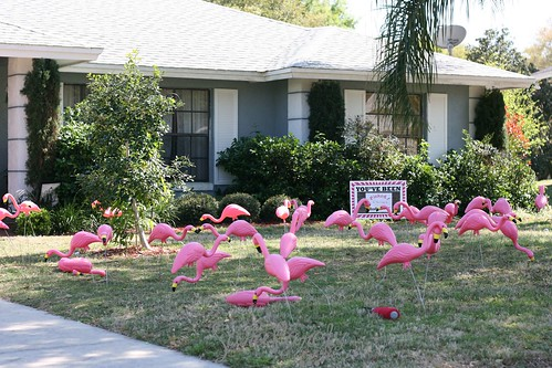 You've been flocked