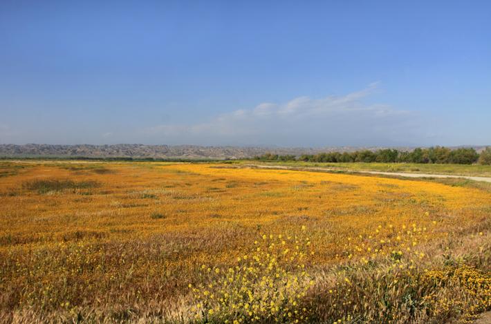 041310_landscape2