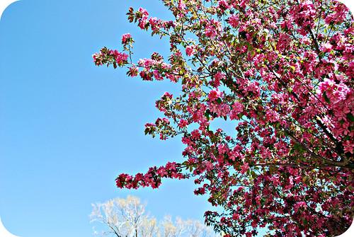 pretty spring day