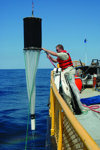 Graduate student Paul Engevold rinses down a sampling net to capture waterfleas and other plankton from Lake Michigan in a collection cup. ~photo John Karl, Wisconsin Sea Grant