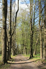 Romanw, Podlasie, Poland (LeszekZadlo) Tags: park trees green nature landscape spring poland polska paisaje polen landschaft polonia pologne wiosna podlasie pajsaye