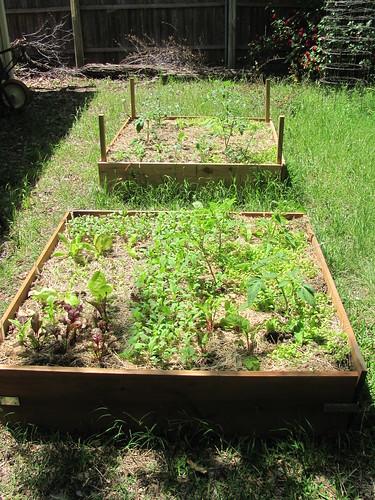 Garden - Week 2