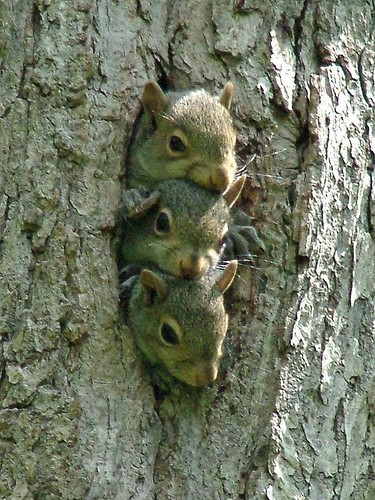 3 Baby Squirrels - Kennerdell by visitPA