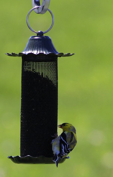 05-05-birds