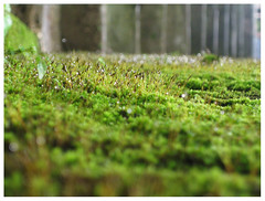 Drizzling (b.h.a.r.a.n.i) Tags: green grass drizzling