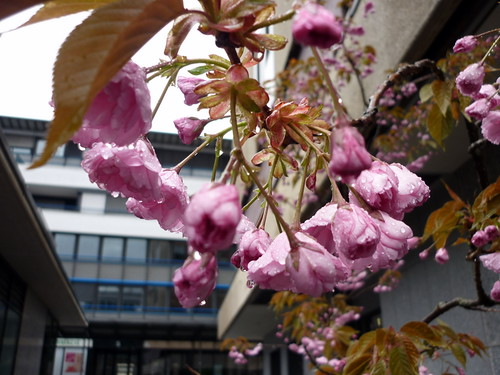 La Chaux-de-Fonds sous la pluie