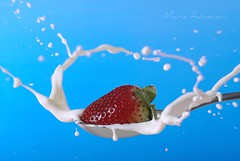 Strawberry splash (butacska) Tags: blue red food white color macro reflection water colors closeup fruit studio photo droplets drops strawberry waterdrop flickr sony cream drop drip photograph droplet whites splash makro szn liquid breathtaking 1870mm picnik highspeed a100 viz 2010 waterdroplet piros eper fotzs kk sznek makr csepp vz sonyalpha kozelkep csobban csobbanas