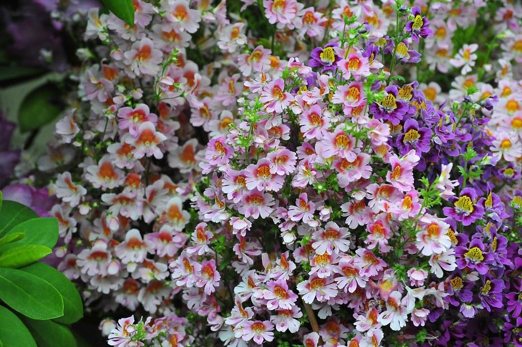 Emily Dickinson's Garden:  The Poetry of Flowers  -  New York Botanical Garden,  Bronx NYC   -   05/18/10