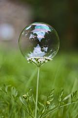 Planeta pompa. (benitojuncal) Tags: soap bubble planet paraiso planeta pompa jabon cercano viascon