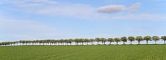 Avenue to Forns fyr (Josef Sauerland) Tags: avenue dnemark allee grenaa fornsfyr