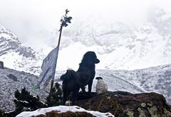 Jhomolhari Guard (edwindejongh) Tags: dog mist mountain snow cold misty fog bhutan sneeuw guard foggy hond himalaya prayerflag koud wachter wacht uitkijk jomolhari gebedsvlag beschermer bewakr missylicklick