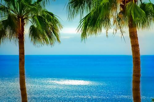 フリー写真素材, 自然・風景, 海, 樹木, やしの木, カナリア諸島,