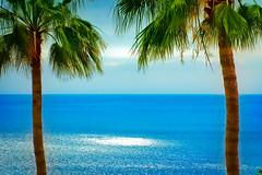 [フリー画像] 自然・風景, 海, 樹木, やしの木, カナリア諸島, 201006021300