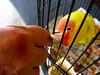 Tropicana Fanta Fruit Punch the 3rd Esquire (Lady Pandacat) Tags: orange bird yellow catchycolors colorful bright 2010 fantabulous pandacat canong9 pandacatbaby tinaangel ladypandacatvonnopants tropicanafantafruitpunchthe3rdesquire