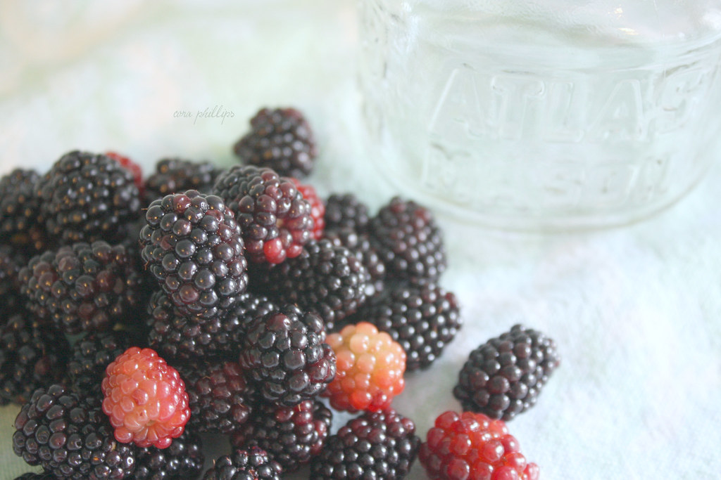 Blackberry Pickings