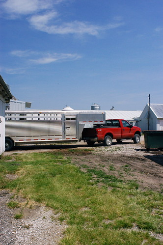 trucks at the pig farm