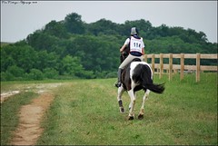 Out of the Starting Box (Five Furlongs) Tags: show horse jumping paint stadium crosscountry event pony plantation rider equestrian equine blankandwhite showjumping painthorse eventing stadiumjumping beginnernovice startingbox plantationfields elementaryhorse