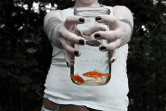fishies! (Tessa Yoder) Tags: orange home still little d guys we cant lettuce them fed find fishies yeayea i dangnabbit