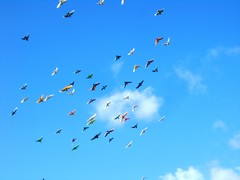 Skittle-Rainbow Birds  (2) (Herb In Hawaii) Tags: pink blue trees sky orange usa cloud sun white house color green colors birds yellow clouds island hawaii daylight flying rainbow day purple pigeon pigeons windy sunny pacificocean blueskies skittles flyover molokai manycolors