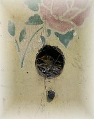 Baby Wrens 2
