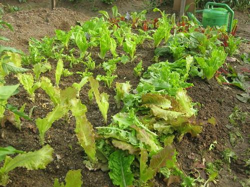 High crop yield :-D