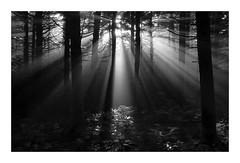 High Bluff Sunrays (Joe Franklin Photography) Tags: morning light sunlight sunrise sunrays westernnorthcarolina roanmountain almostanything wwwjoefranklinphotographycom highblufftrail