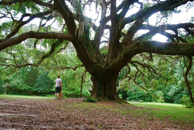 maddy's tree