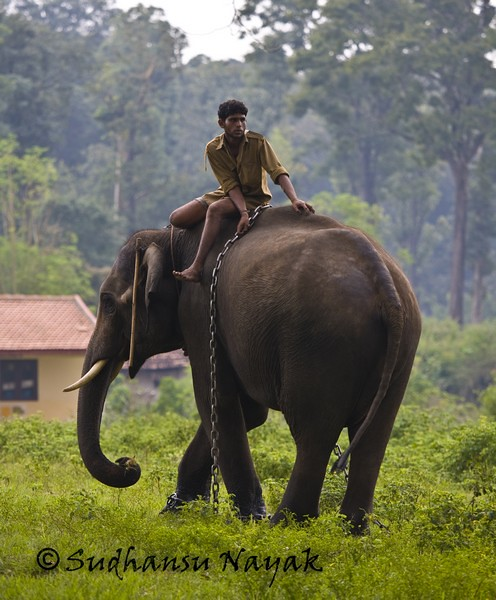 Tamed Elephant in Dubare Elephant Camp