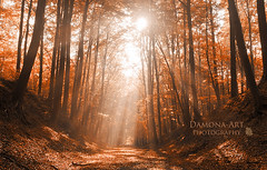 Path to Heaven ( Damona-Art ..`..`) Tags: morning autumn trees light orange sun sunlight fall nature colors leaves playground misty forest photography landscapes lightandshadows woods nikon raw shadows seasons belgium belgique secret magic herbst dream fantasy mystical tervuren sunrays magical forests mystic enchanted sunbeams d300 bookofsecrets 18200vr theworldthroughmyeyes damona thesecretlifeoftrees zauberwelt