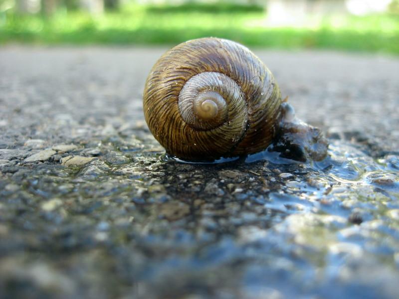 13-10-2010-poor-poor-snail