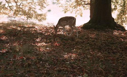 why are deer so cute?