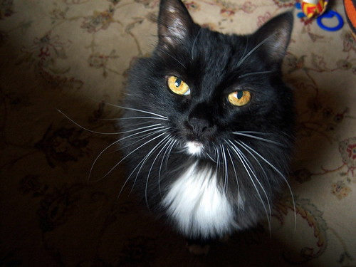 Bubba cat