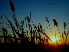 the sun is tired (*maja) Tags: blue sky sun grass yellow set photo colours maja croatia su zaprešić lužnica ribaric